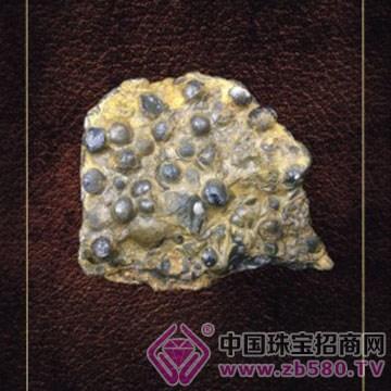 天琛珠宝-小海螺化石02