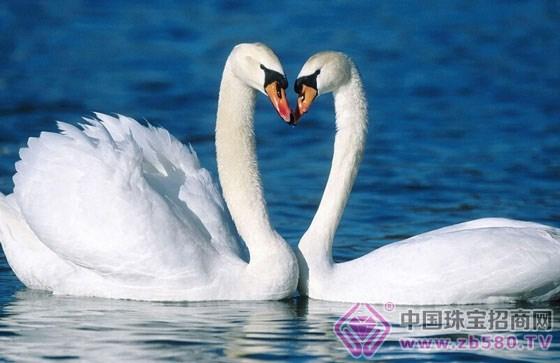 ymiss全新天鹅系列 为真爱献上天鹅般纯粹的爱情图片