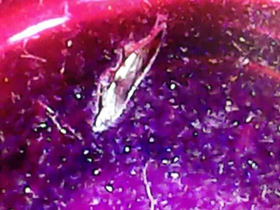 细小的晶核、晶芽和晶体碎片